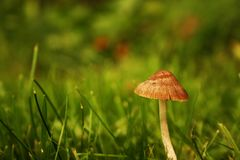 Небольшой гриб растя в поле травы стоковое изображение rf