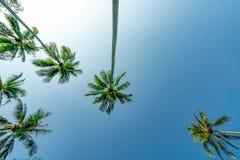 Нижний взгляд кокосовой пальмы на ясном голубом небе Лето и концепция пляжа рая пальма кокоса тропическая каникула территории лет стоковые изображения rf