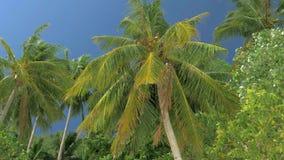 Нижний взгляд леса пальм кокоса в солнечности Пальмы против красивого голубого неба Зеленые пальмы на сини сток-видео