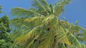 Нижний взгляд леса пальм кокоса в солнечности Пальмы против красивого голубого неба Зеленые пальмы на сини акции видеоматериалы