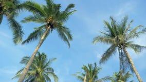 Нижний взгляд леса пальм кокоса в солнечности Пальмы против красивого голубого неба Зеленые пальмы на сини видеоматериал