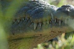 Нил cocodrile стоковая фотография rf