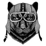 Пантера, пума, кугуар, мотоцикл дикого кота нося, aero шлем r иллюстрация вектора