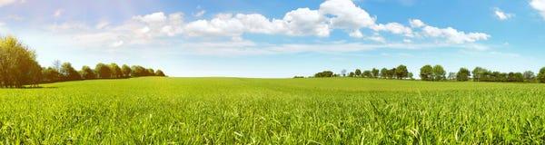 Панорама луга в летнем времени стоковое фото rf