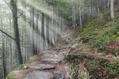 Панорама пути горы с солнечными лучами стоковая фотография