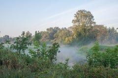 Парк ландшафта Rogalin - озеро oxbow в тумане после восхода солнца стоковые фото
