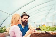 пары работая в парнике Поверните назад женский флорист говоря со зверским человеком с длинной бородой и усиком в голубом жилете стоковое изображение
