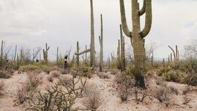 Пар путешественника замедленного движения пустыня кактуса Saguaro молодых романтичных исследуя изумляя в эпичном национальном пар акции видеоматериалы