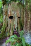 Пень дерева в лесе с лицевыми особенностями стоковое изображение
