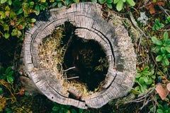 Пень сочного, неубедительного дерева стоковые фотографии rf