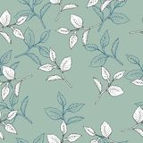 Tea tree leaves pattern. Hand drawn vector illustration. stock illustration