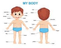 My body. Cute cartoon boy. Body parts poster royalty free illustration