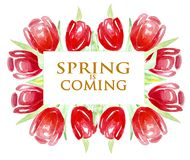 Spring is coming, Frame of bright red tulips. Watercolor. vector illustration
