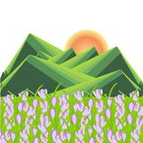 Spring mountain landscape. Green striped hills, violet crocus flowers, yellow sun. Fl royalty free illustration