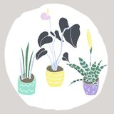 House plants set. stock illustration
