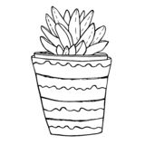 Succulent in a ceramic flower pot. Hand drawn sketch. Coloring book page royalty free illustration