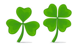 Печать. Vector illustration of four-leaf and trifoliate clover isolated on white background. Realistic lucky clover leaves. St. Patrick`s day symbol Stock Photo
