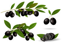 Печать. Vector set leafy green twigs with healthy ripe black olives  on white background Stock Image