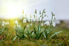 Первые цветки весны в солнце стоковые фото