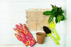 Перчатки сада копают заводы в предпосылке баков голубой деревянной против детенышей весны цветка принципиальной схемы предпосылки стоковые фото