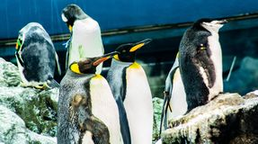 Пингвин спать на зоопарке в Испании стоковое изображение