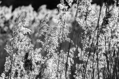 Плакат предпосылки - тростники в долине около Bexhill, восточном Сассекс Combe, Англии стоковые изображения rf