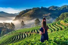 Платье племени холма женщины нося в саде клубники на Ang Khang Doi, Чиангмае, Таиланде стоковые фотографии rf