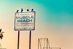 Пляж мышцы подписывает внутри ЛА стоковое изображение rf