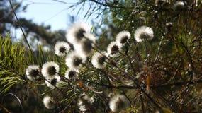 пушистые шарики травы подсвечены осенним солнцем royalty free stock images