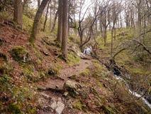 Путь в древесинах небольшим Бек стоковое фото