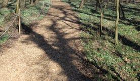 Путь поля Snowdrop около Alcsut Венгрии стоковое изображение
