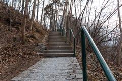 Путь через лес лестниц стоковые изображения rf