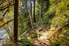 Путь отрезал до конца лес вдоль края реки в Вашингтоне стоковое фото rf