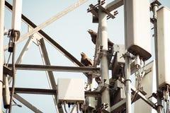Птица на высоковольтной передающей линии Птицы не получают сотрясенными когда они сидят на электрических проводах как обе из ног  стоковые фото