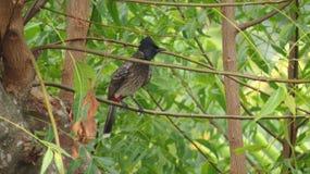 Птица самостоятельно на ветви дерева стоковое изображение rf
