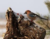 Птица; фамилия стоковые изображения rf
