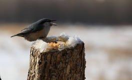 Птица; фамилия стоковое фото rf