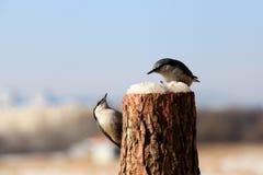 Птица; фамилия стоковые фото
