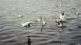 Птицы ныряя, летая и воюя стоковое изображение rf