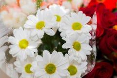 Праздничный букет белых маргариток стоковое фото rf