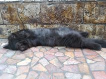 прелестный черный котенок лежа на поле стоковые фотографии rf