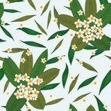 Предпосылка букета Plumeria безшовная белая бесплатная иллюстрация