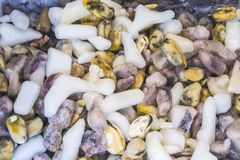 предпосылка или текстура Замороженные мидии с льдом Морепродукты деликатность Блюдо для гурманов рынок стоковая фотография