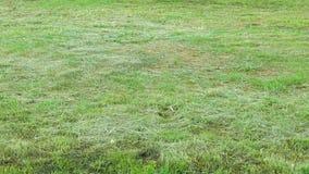 Предпосылка поля зеленой травы стоковое изображение rf