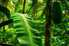 Приключение джунглей зеленого дождевого леса тропическое в Восточной Азии стоковое фото rf