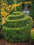 Причудливый вечнозеленый кустарник стоковая фотография rf