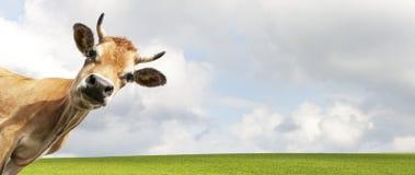 природа горы лужка ландшафта коровы принципиальной схемы стоковые фотографии rf