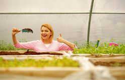 Производитель почвы производитель плодородной почвы индустрия производителя почвы женщина представляет большой палец руки показа  стоковое фото