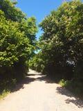 Проселочная дорога между деревьями в солнечной погоде стоковое изображение rf