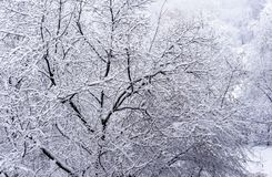 покрытые Снег деревья в парке зимы зима ландшафта рисуночная стоковые изображения rf